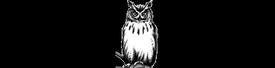 Mortgage Wyse Logo White